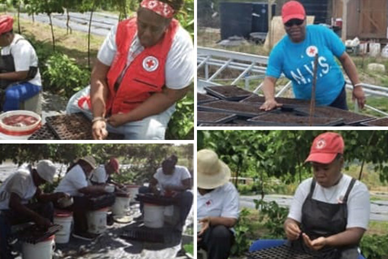 35,000 Seeds Planted in Antigua and Barbuda