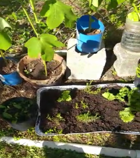 From Yard to Table - Strengthening Household Food Security in Antigua and Barbuda